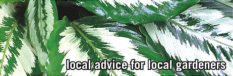 local advice for local gardeners with subTropical Gardening magazine